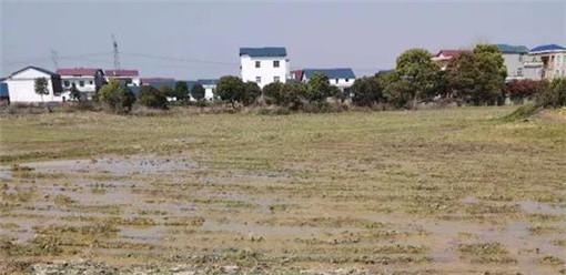 罗坊镇东边村两块地在渝水区农村产权交易中心挂牌流转-农交网