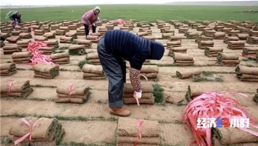 南昌土流實業公司種植的草皮-土流網